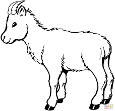 Small Picture Goat Coloring Page Goat Colouring Page Goat Coloring Page In