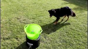 ball thrower for dogs. ball thrower for dogs o