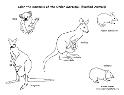 Small Picture Marsupial Coloring PagesColoringPrintable Coloring Pages Free