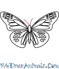 drawing butterfly pictures. Simple Drawing Print Tutorial In Drawing Butterfly Pictures B