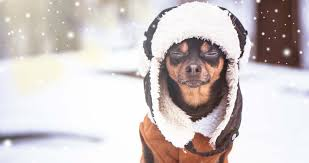 50 Best Dog Winter Clothes (jackets, boots, scarfs, sweaters and more)