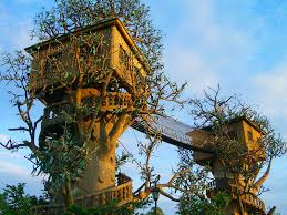 Does Designer Tree House Visually Tie Two Trees DMA Homes 77245
