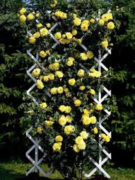 Small Picture Design Your Own Rose Garden wwwcoolgardenme