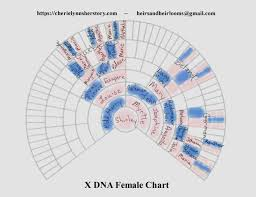 X Dna Fan Chart X Dna Its A Girl Thing And We Included The Boys