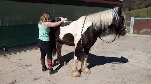 """Résultat de recherche d'images pour """"soins energetique animaux et cheval"""""""