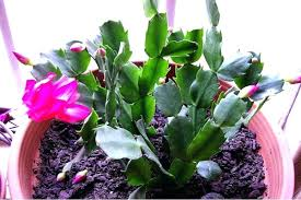house plants safe for cats 7 indoor plants safe for dog and cat households houseplants safe