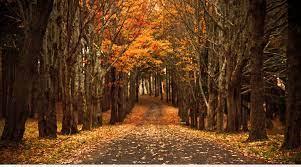Late Autumn Desktop Backgrounds on ...