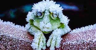 Increíble! Animales que resisten la congelación