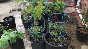 <b>Automatic</b> Plant <b>Watering System</b> + <b>Self Watering System</b> for Potted ...