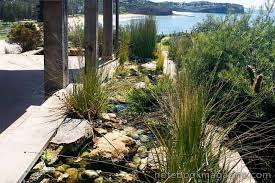 Small Picture Australian water wise planting gallery 1 of 19 Homelife