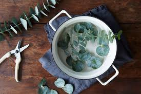 With this in mind (and also because some fabric-dyeing experiments made us  realize that simmering eucalyptus leaves give off a heavenly, spa-like scent)  we ...