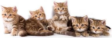 Résultat de recherche d'images pour 'felin'