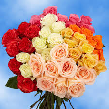 globalrose 50 orted roses fresh flower delivery 2 colors
