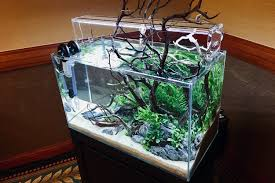 we donated the ada cube garden 60 p aquasky g 601 light to the aga as the sponsor support to the organization