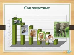 Сон и сновидения Презентация • Блог Михаила Титова Школа  Сон животных