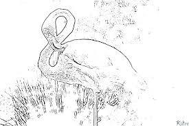 Flamingo Kleurplaten Kidre