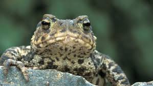 Image result for toads