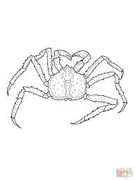 Small Picture Coloring Pages Animals Crab Coloring Pages Hermit Crab Coloring