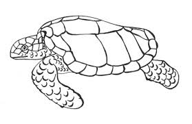 Small Picture Drawing sea turtles