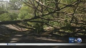 Highland Park family worries neighbor\u0027s tree will damage home ...