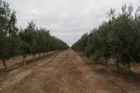 Resultado de imagen para aceite de oliva san juan sarmiento