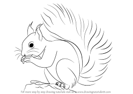 Small Picture Learn How to Draw a Red Squirrel Rodents Step by Step Drawing