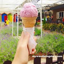 green view garden is happy with this idea so here you go i got 10 ice cream vouchers for you to enjoy in your next cameron highlands trip