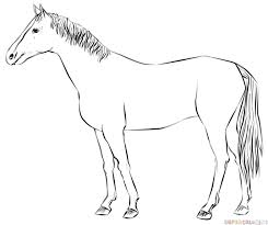horses drawings. Plain Horses How To Draw A Realistic Horse Standing For Horses Drawings S