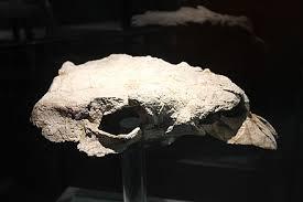 Zhongyuansaurus - Wikiwand