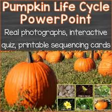 Pumpkin Life Cycle Powerpoint W Real Photos Interactive Quiz