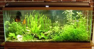 aquarium garden.  Aquarium If  To Aquarium Garden D