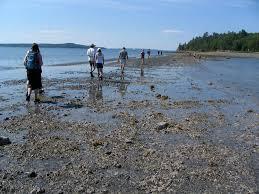 Acadia National Park Bar Island Maine Trail Finder