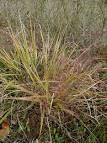 tumble grass