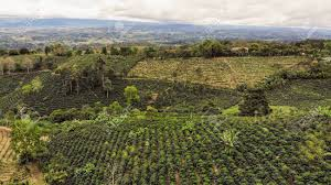 Costa rica has the best coffees in the world. Aerial View Of Coffee Plantation In San Vito Costa Rica Stock Photo Picture And Royalty Free Image Image 136641038