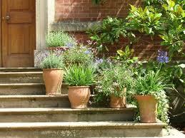 epsom salt gardening. Feeding Epsom Salt To Potted Plants Gardening P