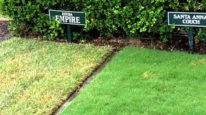 Grass Couch What Grass Is That Empire Zoysia Santa Ana Couch Wintergreen