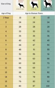 German Shepherd Weight Chart Von Calvo German Shepherds Gsd Things To Know Von Calvo