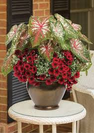 ring around the rosy bring a tropical flair to an otherwise ordinary patio container flower beds and gardens