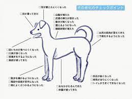 老 犬 最期 症状