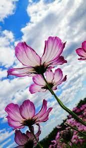 110 Marisol ideas | beautiful flowers, pretty flowers, flower garden