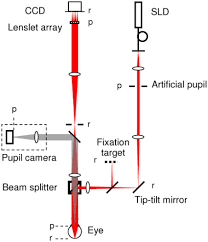 OSA | Measuring directionality of the retinal reflection with a Shack ...