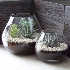 Mini Indoor Succulents Design