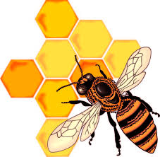 Image result for honeycomb border