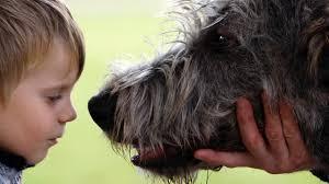 Hunde Als Therapeuten Der Beste Freud Des Menschen Spiegel Online
