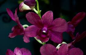 Identifying Orchids Longwood Gardens