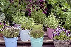 herbs to grow in your herb garden