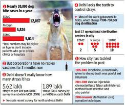 Pug Dog Vaccination Chart 1 000 People At Delhis Rml For Anti Rabies Shot Heres Why