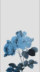 Aesthetic Flower Wallpaper Phone