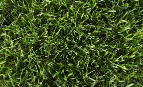 What Type Of Grass Do I Have Grass Identification Roundup