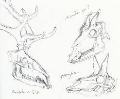 Sketches Animal Museum Sketches Animal Skulls Tonij Com